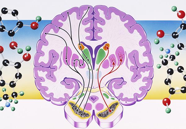 多巴胺只和愛情快感有關?它卻還關乎成癮和精神分裂症 1