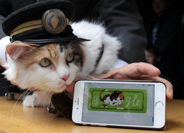 喵星人為何稱霸日本:從「貓貓經濟學」到「貓型社會」 1