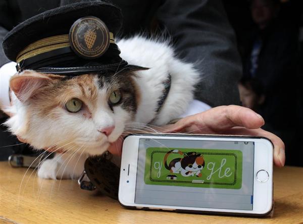 喵星人為何稱霸日本:從「貓貓經濟學」到「貓型社會」 3