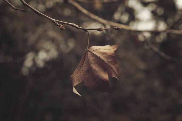 傷春悲秋不是矯情-了解季節性情感障礙 1