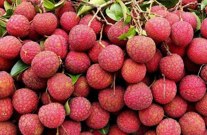 攝取不同營養素 月經期間慎選水果 1