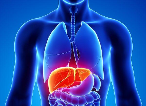 胃病肝病如何防治?聽專家講科普 1