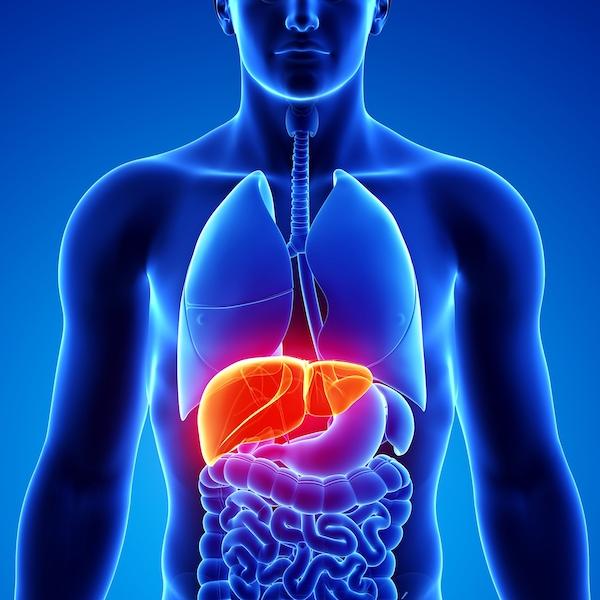 胃病肝病如何防治?聽專家講科普 4