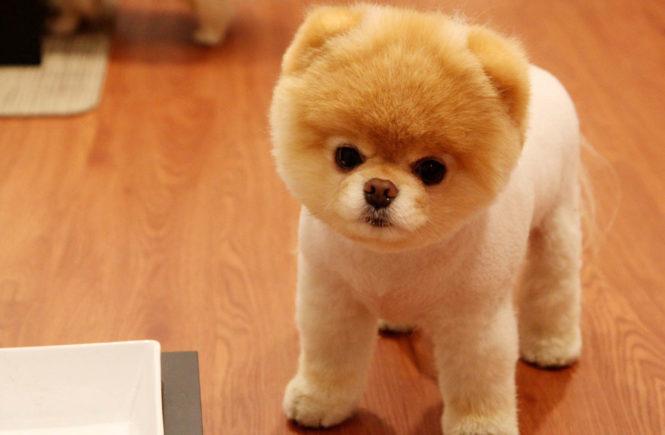 養狗有助減壓 還能護心? 1