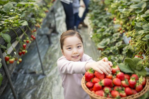 草莓二三事-採草莓會有農藥殘留嗎?白色的草莓安全嗎? 1
